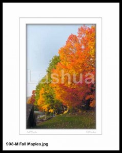 908-M Fall Maples